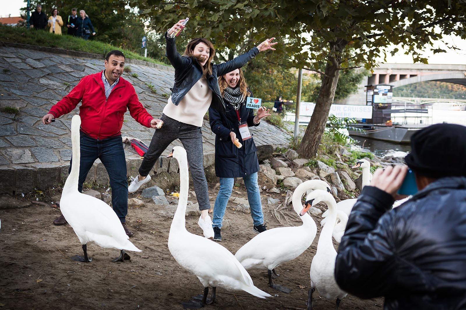 Team se foti u brehu Vltavy jak krmi labute pri interaktivni prohlidce mesta Photopoly
