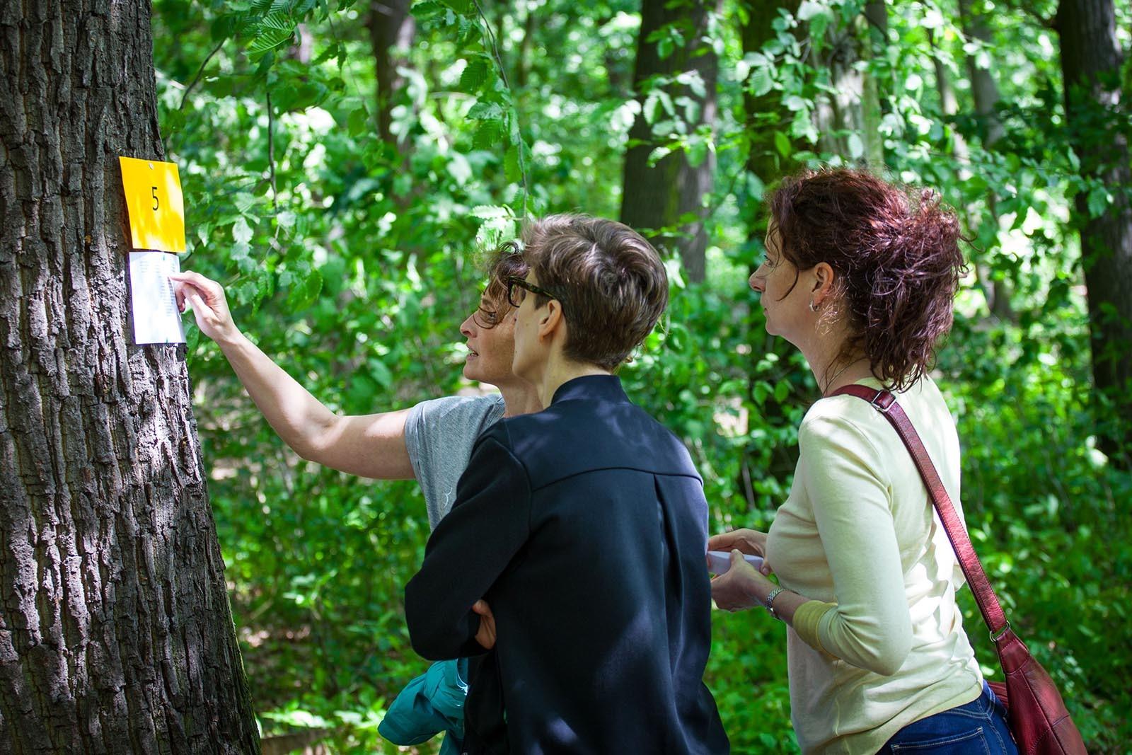 Teamy plni po lese nekojik ukolu ktere prohloubi jejich ekologicke citeni v Tree Mend Us