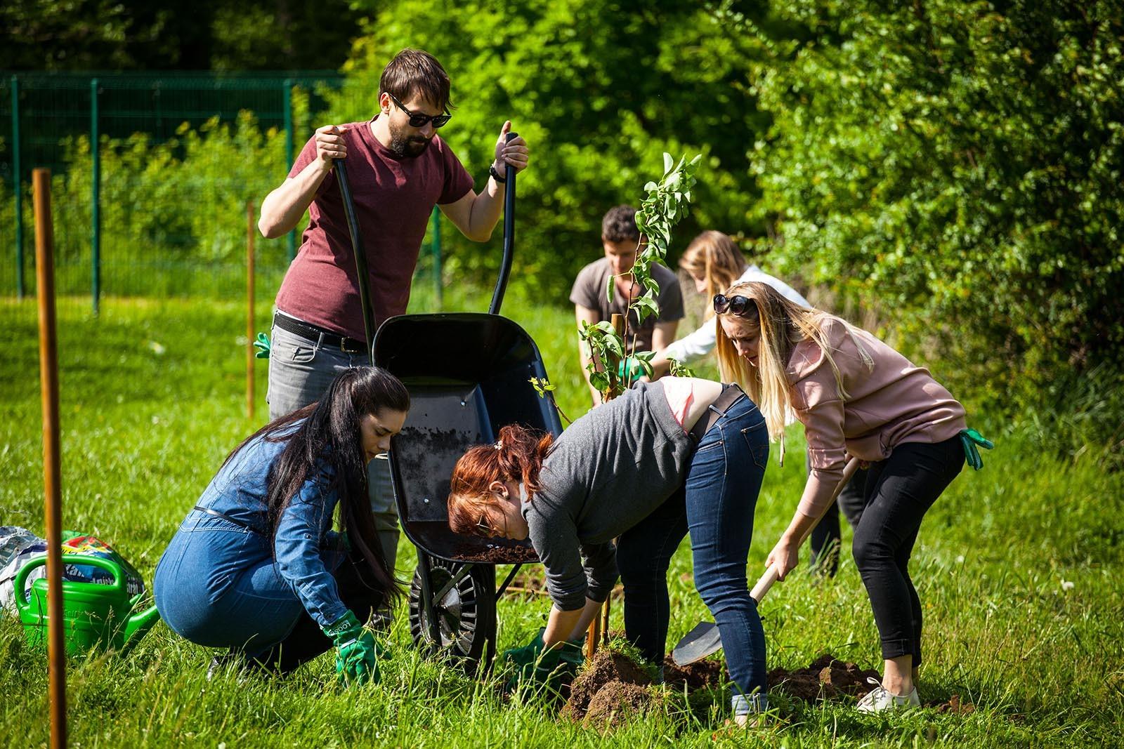 Vsichni pracuji na vykopani diry kam se zasadi ovocny strom v programu Tree Mend Us